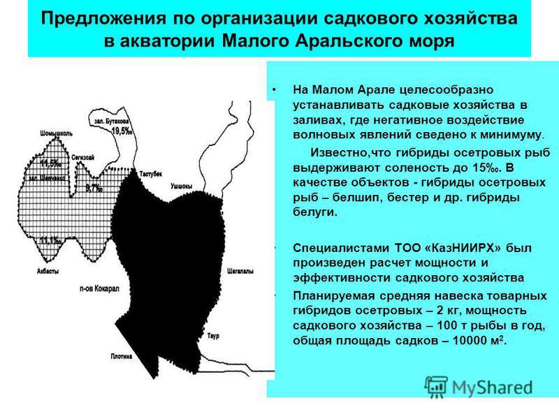 Предложения по организации садкового хозяйства в акватории Малого Аральского моря На Малом Арале целесообразно устанавливать садковые хозяйства в заливах, где негативное воздействие волновых явлений сведено к минимуму. Известно,что гибриды осетровых