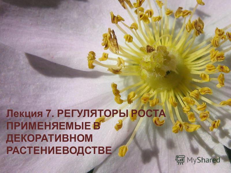 Лекция 7. РЕГУЛЯТОРЫ РОСТА ПРИМЕНЯЕМЫЕ В ДЕКОРАТИВНОМ РАСТЕНИЕВОДСТВЕ
