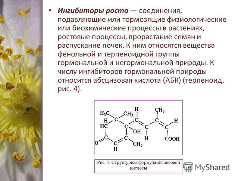 Ингибиторы роста соединения, подавляющие или тормозящие физиологические или биохимические процессы в растениях, ростовые процессы, прорастание семян и распускание почек. К ним относятся вещества фенольной и терпеноидной группы гормональной и негормон
