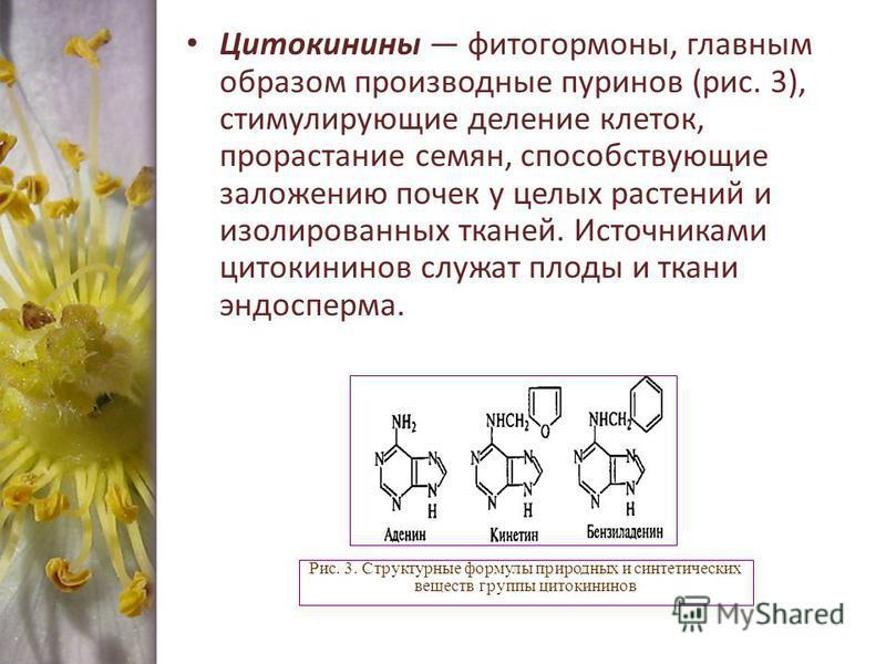 Цитокинины фитогормоны, главным образом производные пуринов (рис. 3), стимулирующие деление клеток, прорастание семян, способствующие заложению почек у целых растений и изолированных тканей. Источниками цитокининов служат плоды и ткани эндосперма. Ри