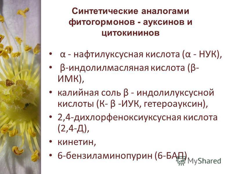 Синтетические аналогами фитогормонов - ауксинов и цитокининов α - нафтилуксусная кислота (α - НУК), β-индолилмасляная кислота (β- ИМК), калийная соль β - индолилуксусной кислоты (К- β -ИУК, гетероауксин), 2,4-дихлорфеноксиуксусная кислота (2,4-Д), ки