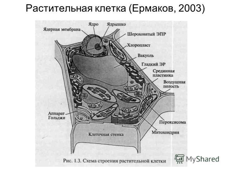 Растительная клетка (Ермаков, 2003)