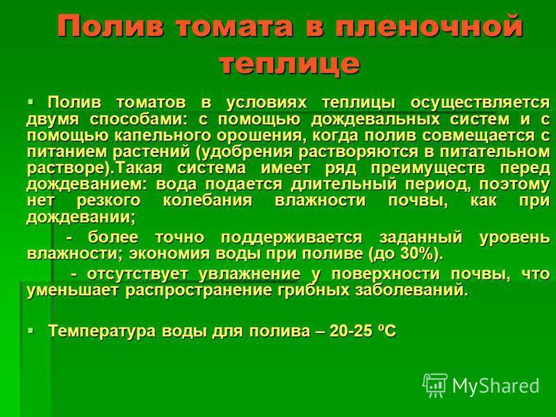 Полив томата в пленочной теплице Полив томатов в условиях теплицы осуществляется двумя способами: с помощью дождевальных систем и с помощью капельного орошения, когда полив совмещается с питанием растений (удобрения растворяются в питательном раствор