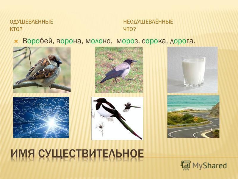 ОДУШЕВЛЕННЫЕ КТО? НЕОДУШЕВЛЁННЫЕ ЧТО? Воробей, ворона, молоко, мороз, сорока, дорога.