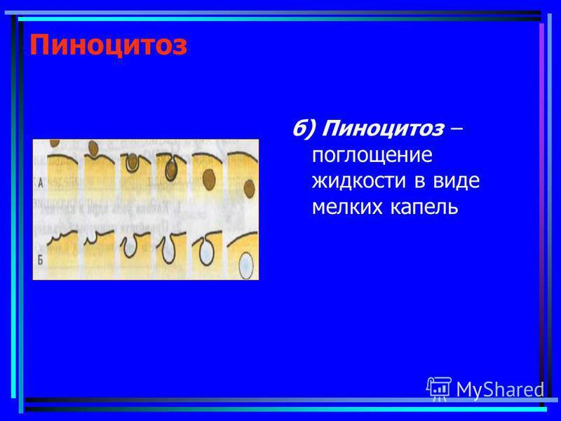 Пиноцитоз