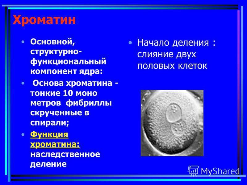 Хроматин Основной, структурно- функциональный компонент ядра: Основа хроматина - тонкие 10 моно метров фибриллы скрученные в спирали; Функция хроматина: наследственное деление Начало деления : слияние двух половых клеток
