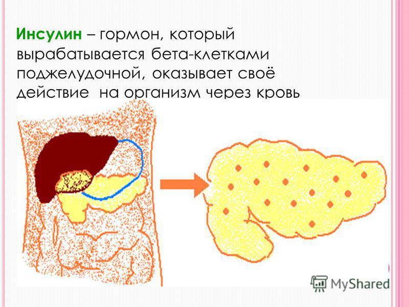 Глюкоза в организм человека поступает двумя путями: Из кишечника после каждого приема пищи. - Из печени, где она «находится в запасе» в виде гликогена