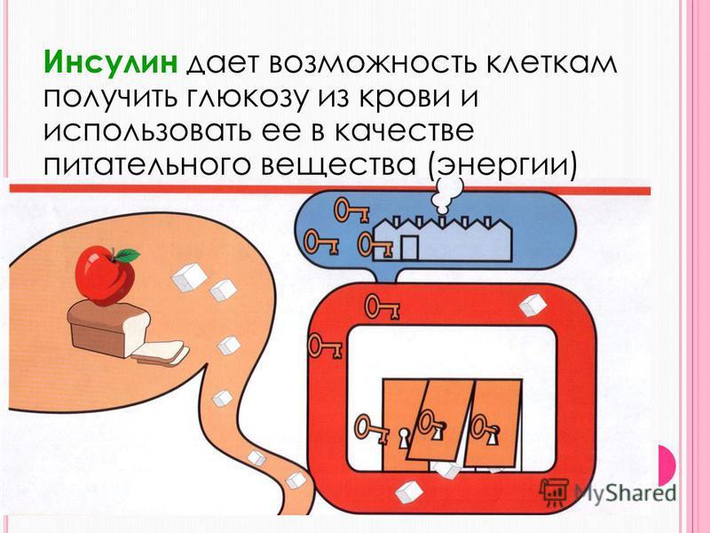 Инсулин – гормон, который вырабатывается бета-клетками поджелудочной, оказывает своё действие на организм через кровь