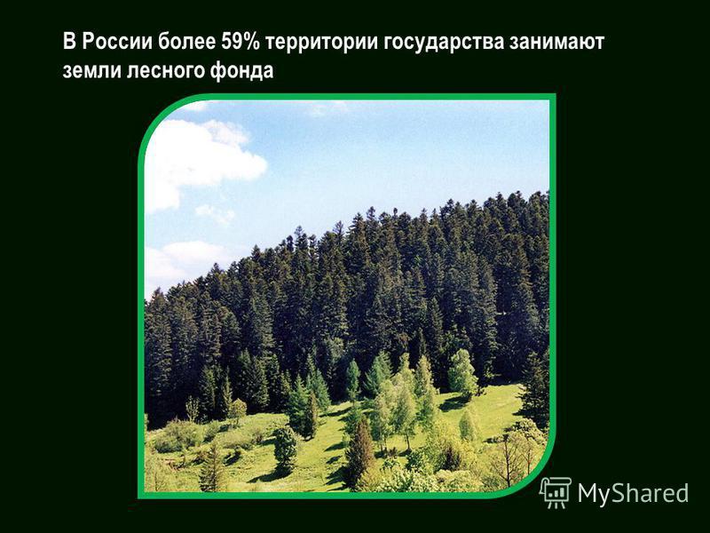 В России более 59% территории государства занимают земли лесного фонда