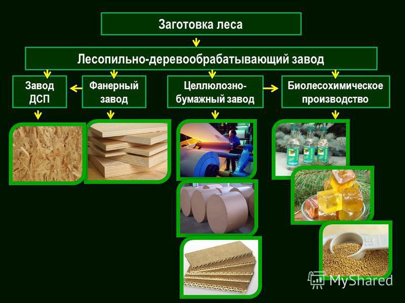 Заготовка леса Лесопильно-деревообрабатывающий завод Завод ДСП Фанерный завод Целлюлозно- бумажный завод Биолесохимическое производство