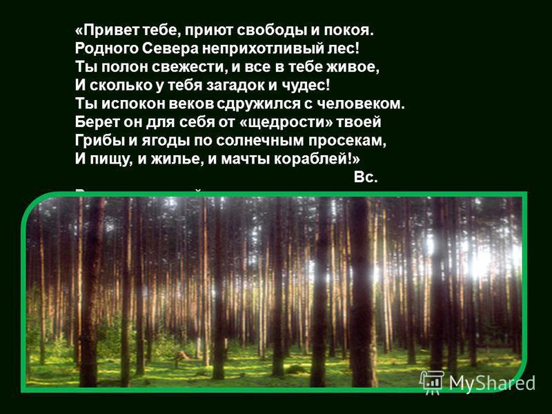 «Привет тебе, приют свободы и покоя. Родного Севера неприхотливый лес! Ты полон свежести, и все в тебе живое, И сколько у тебя загадок и чудес! Ты испокон веков сдружился с человеком. Берет он для себя от «щедрости» твоей Грибы и ягоды по солнечным п
