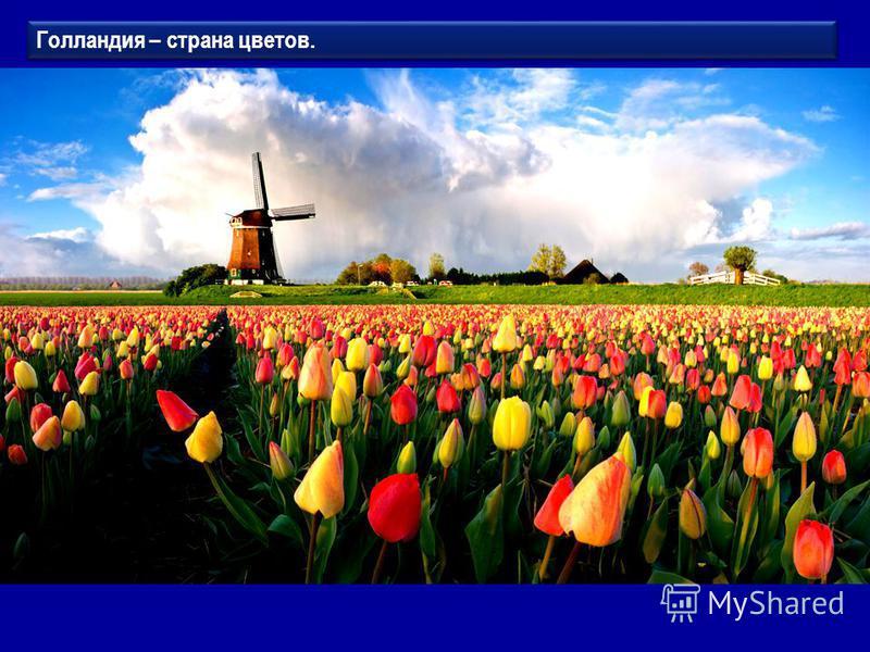 Голландия – страна цветов.
