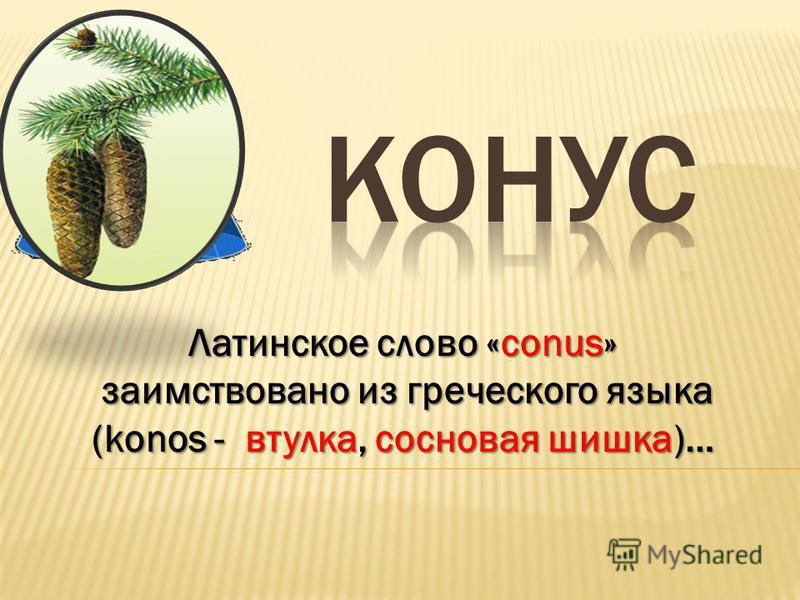 Латинское слово «conus» заимствовано из греческого языка заимствовано из греческого языка (konos - втулка, сосновая шишка)…