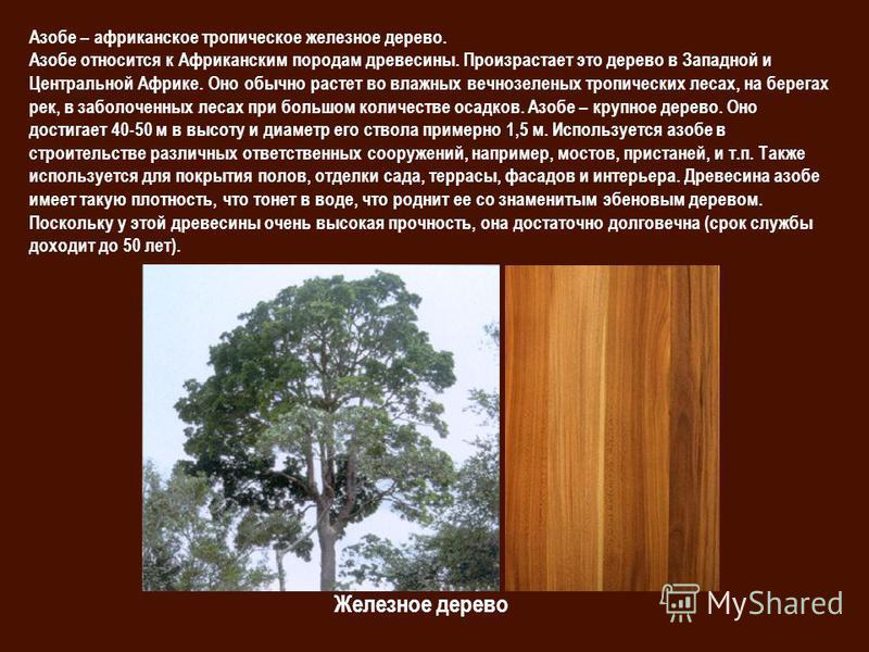 Железное дерево Азобе – африканское тропическое железное дерево. Азобе относится к Африканским породам древесины. Произрастает это дерево в Западной и Центральной Африке. Оно обычно растет во влажных вечнозеленых тропических лесах, на берегах рек, в