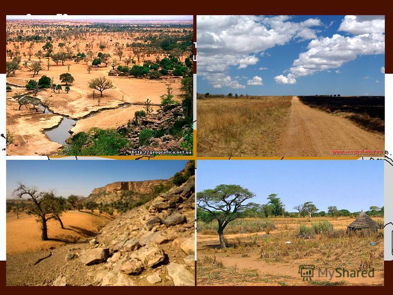 Смена ПЗ с севера на юг. Северные страны – Сахель. Сахель – полоса полупустынь и опустыненных саванн, протянувшаяся с запада на восток вдоль южной границы Сахары.