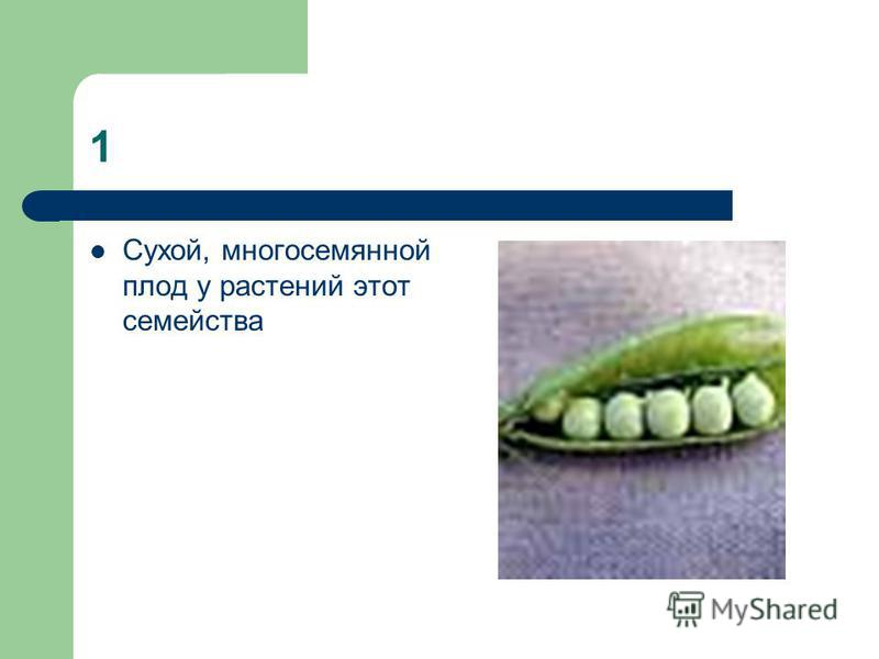 1 Сухой, многосемянной плод у растений этот семейства