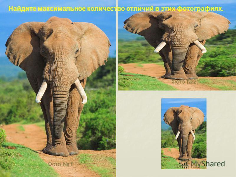 Фото 1. Фото 2. Фото 3. Найдите максимальное количество отличий в этих фотографиях.