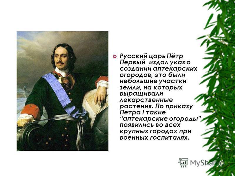 Русский царь Пётр Первый издал указ о создании аптекарских огородов, это были небольшие участки земли, на которых выращивали лекарственные растения. По приказу Петра I такие аптекарские огороды появились во всех крупных городах при военных госпиталях