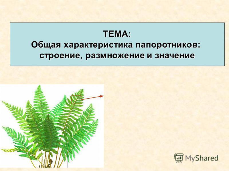 ТЕМА: Общая характеристика папоротников: строение, размножение и значение