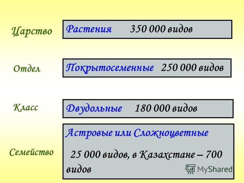 Царство Отдел Класс Семейство Растения 350 000 видов Покрытосеменные 250 000 видов Двудольные 180 000 видов Астровые или Сложноцветные 25 000 видов, в Казахстане – 700 видов