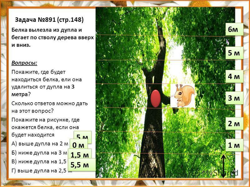 Задача 891 (стр.148) Белка вылезла из дупла и бегает по стволу дерева вверх и вниз. Вопросы: Покажите, где будет находиться белка, ели она удалиться от дупла на 3 метра? Сколько ответов можно дать на этот вопрос? Покажите на рисунке, где окажется бел