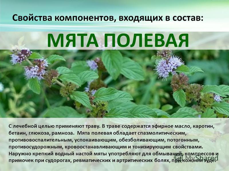 Свойства компонентов, входящих в состав: МЯТА ПОЛЕВАЯ С лечебной целью применяют траву. В траве содержатся эфирное масло, каротин, бетаин, глюкоза, рамноза. Мята полевая обладает спазмолитическим, противовоспалительным, успокаивающим, обезболивающим,