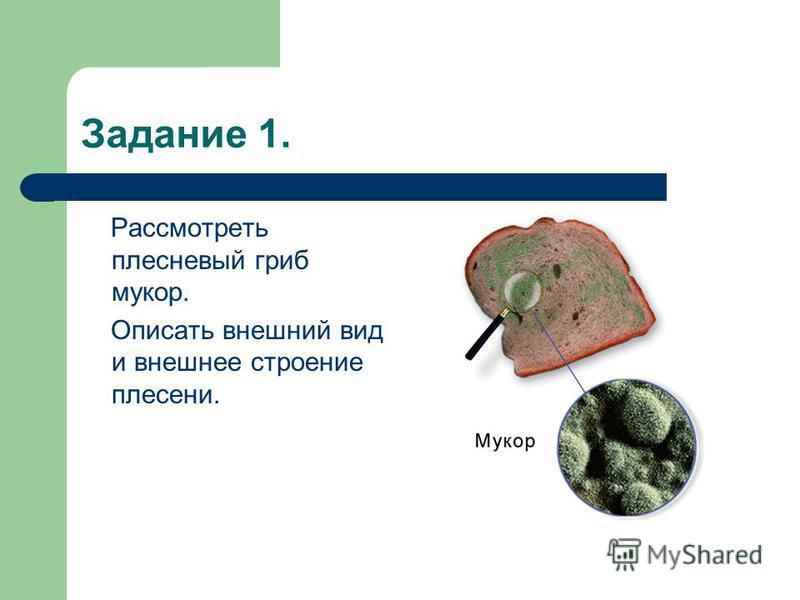 Задание 1. Рассмотреть плесневый гриб мукор. Описать внешний вид и внешнее строение плесени.