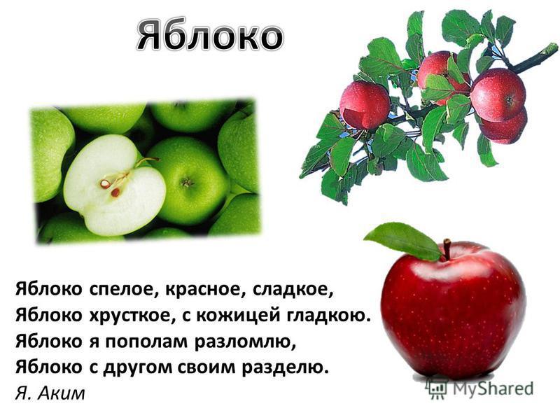 Яблоко спелое, красное, сладкое, Яблоко хрусткое, с кожицей гладкою. Яблоко я пополам разломлю, Яблоко с другом своим разделю. Я. Аким