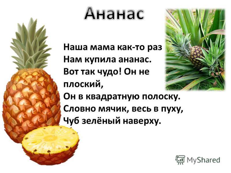 Наша мама как-то раз Нам купила ананас. Вот так чудо! Он не плоский, Он в квадратную полоску. Словно мячик, весь в пуху, Чуб зелёный наверху.