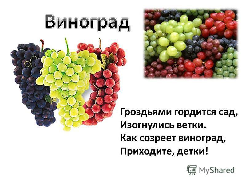 Гроздьями гордится сад, Изогнулись ветки. Как созреет виноград, Приходите, детки!