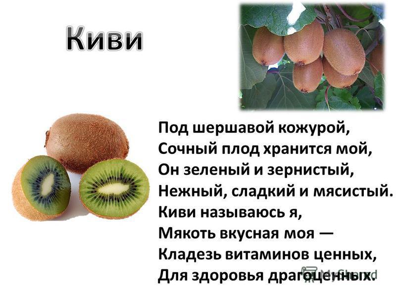 Под шершавой кожурой, Сочный плод хранится мой, Он зеленый и зернистый, Нежный, сладкий и мясистый. Киви называюсь я, Мякоть вкусная моя Кладезь витаминов ценных, Для здоровья драгоценных.