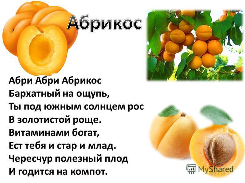 Абри Абри Абрикос Бархатный на ощупь, Ты под южным солнцем рос В золотистой роще. Витаминами богат, Ест тебя и стар и млад. Чересчур полезный плод И годится на компот.