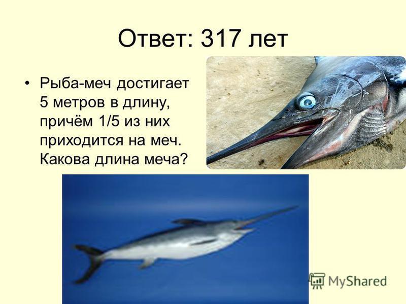 Ответ: 317 лет Рыба-меч достигает 5 метров в длину, причём 1/5 из них приходится на меч. Какова длина меча?