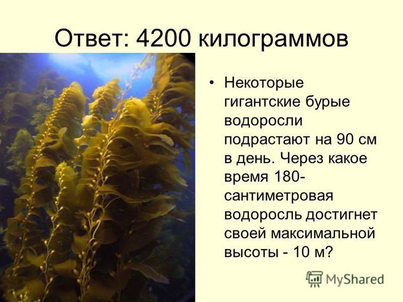 Ответ: 4200 килограммов Некоторые гигантские бурые водоросли подрастают на 90 см в день. Через какое время 180- сантиметровая водоросль достигнет своей максимальной высоты - 10 м?