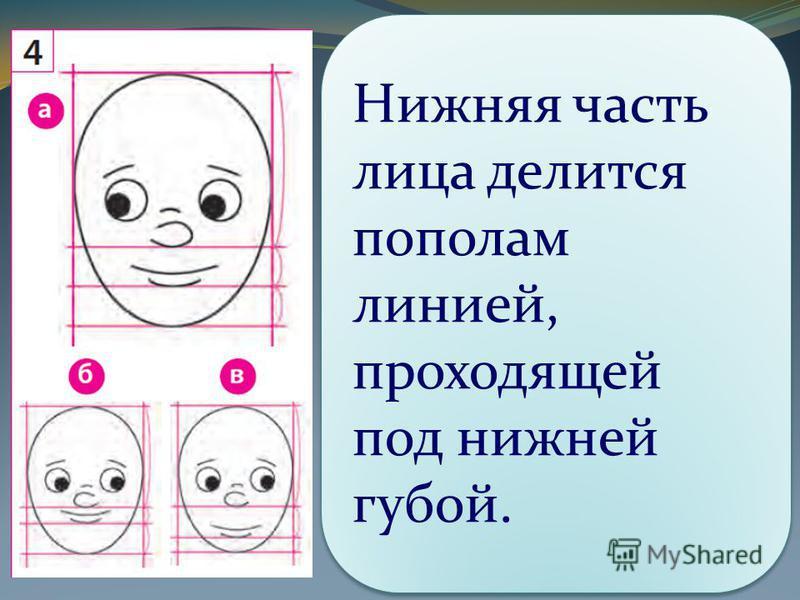 Нижняя часть лица делится пополам линией, проходящей под нижней губой.