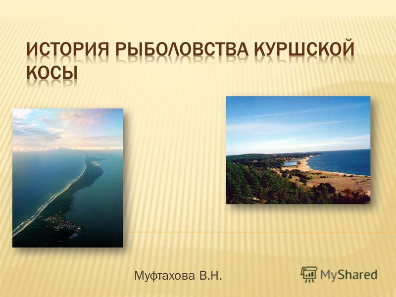 Муфтахова В.Н.
