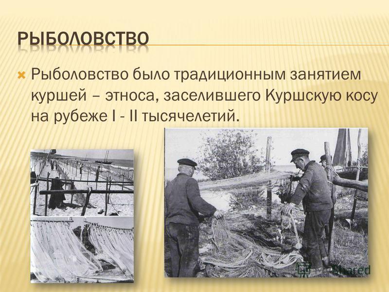 Рыболовство было традиционным занятием куршей – этноса, заселившего Куршскую косу на рубеже I - II тысячелетий.