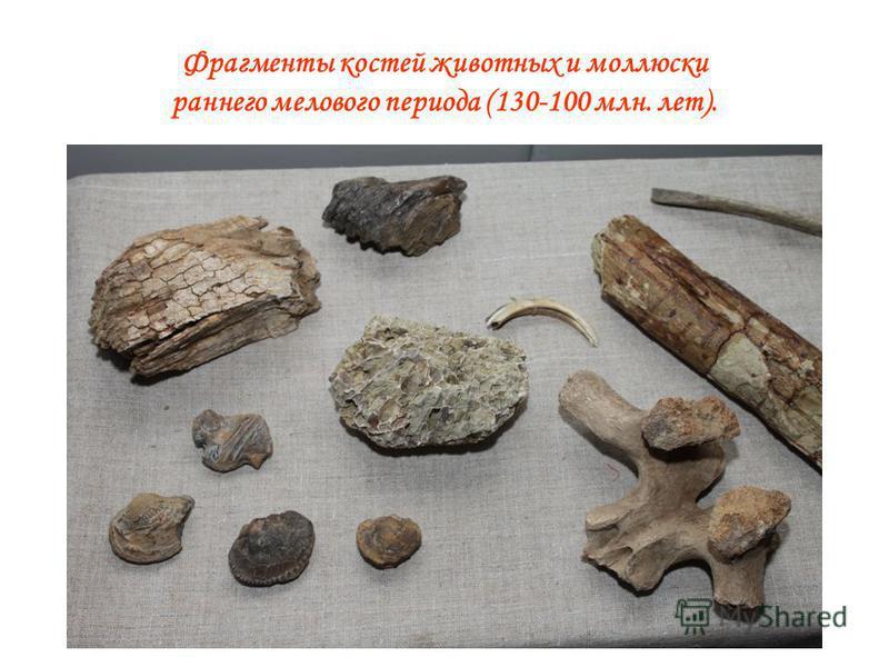 Фрагменты костей животных и моллюски раннего мелового периода (130-100 млн. лет).