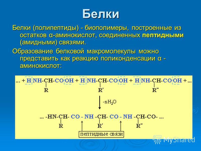 Белки Белки (полипептиды) - биополимеры, построенные из остатков α-аминокислот, соединенных пептидными (амидными) связями. Образование белковой макромолекулы можно представить как реакцию поликонденсации α - аминокислот: