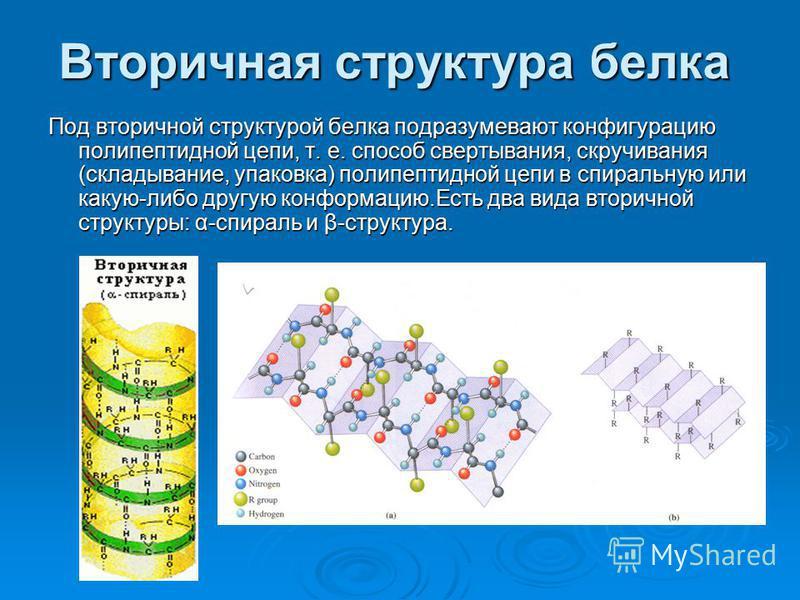 Вторичная структура белка Под вторичной структурой белка подразумевают конфигурацию полипептидной цепи, т. е. способ свертывания, скручивания (складывание, упаковка) полипептидной цепи в спиральную или какую-либо другую конформацию.Есть два вида втор