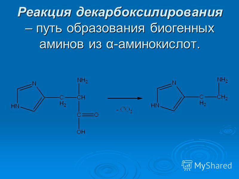 Реакция декарбоксилирования – путь образования биогенных аминов из α-аминокислот.