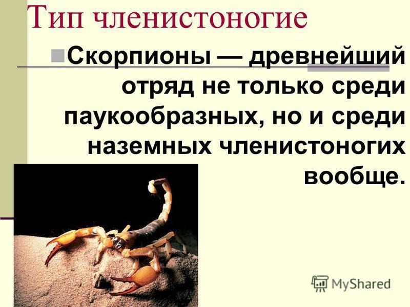 Тип членистоногие Скорпионы древнейший отряд не только среди паукообразных, но и среди наземных членистоногих вообще.