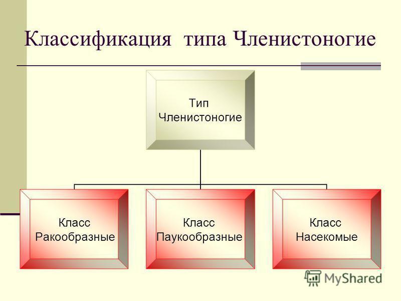 Классификация типа Членистоногие Тип Членистоногие Класс Ракообразные Класс Паукообразные Класс Насекомые