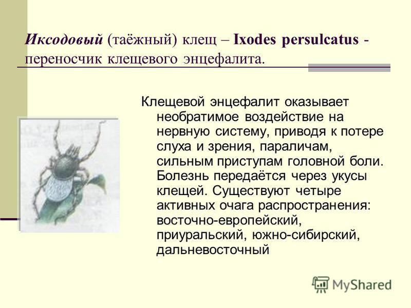 Иксодовый (таёжный) клещ – Ixodes persulcatus - переносчик клещевого энцефалита. Клещевой энцефалит оказывает необратимое воздействие на нервную систему, приводя к потере слуха и зрения, параличам, сильным приступам головной боли. Болезнь передаётся