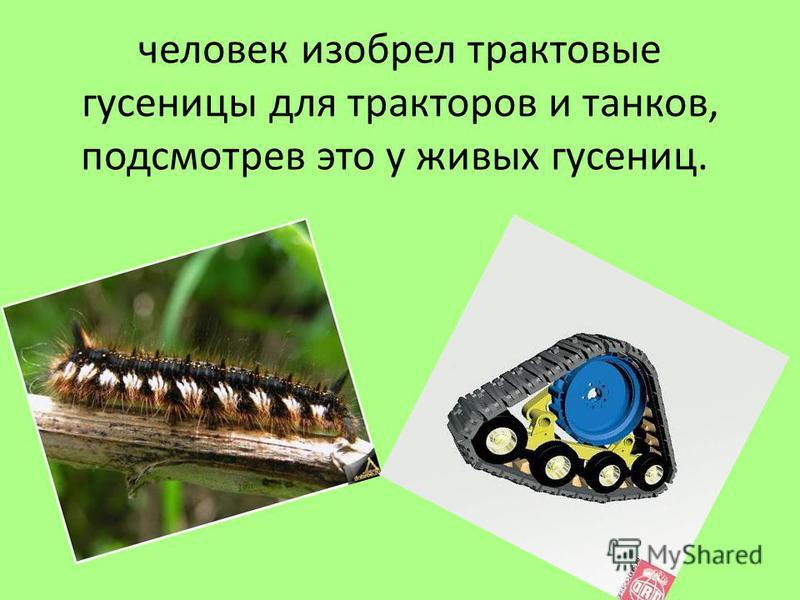 человек изобрел трактовые гусеницы для тракторов и танков, подсмотрев это у живых гусениц.
