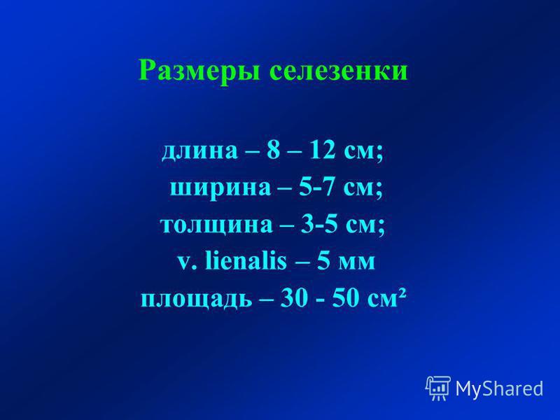 Размеры селезенки длина – 8 – 12 см; ширина – 5-7 см; толщина – 3-5 см; v. lienalis – 5 мм площадь – 30 - 50 см²