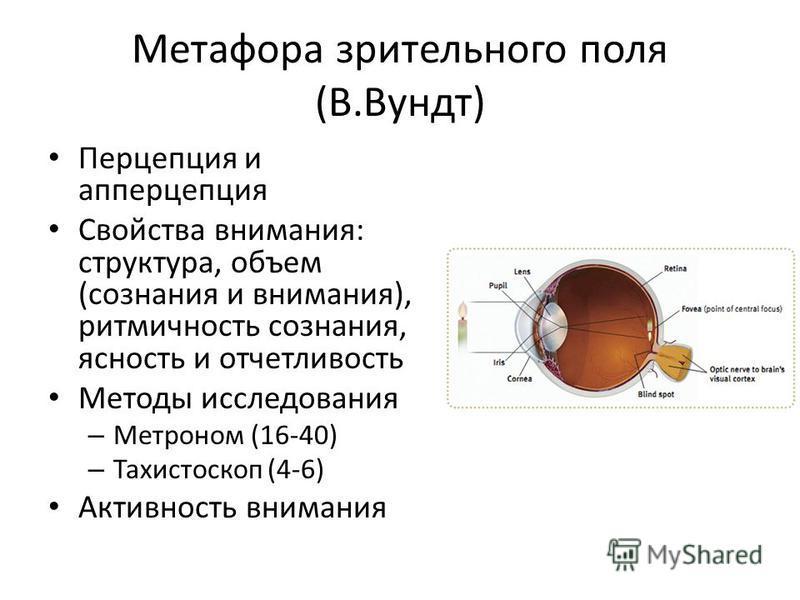 Метафора зрительного поля (В.Вундт) Перцепция и апперцепция Свойства внимания: структура, объем (сознания и внимания), ритмичность сознания, ясность и отчетливость Методы исследования – Метроном (16-40) – Тахистоскоп (4-6) Активность внимания