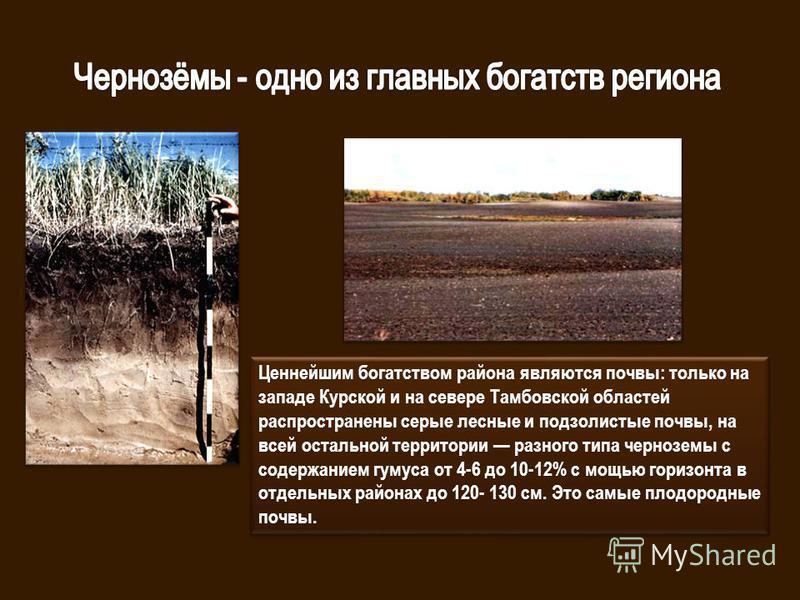 Ценнейшим богатством района являются почвы: только на западе Курской и на севере Тамбовской областей распространены серые лесные и подзолистые почвы, на всей остальной территории разного типа черноземы с содержанием гумуса от 4-6 до 10-12% с мощью го