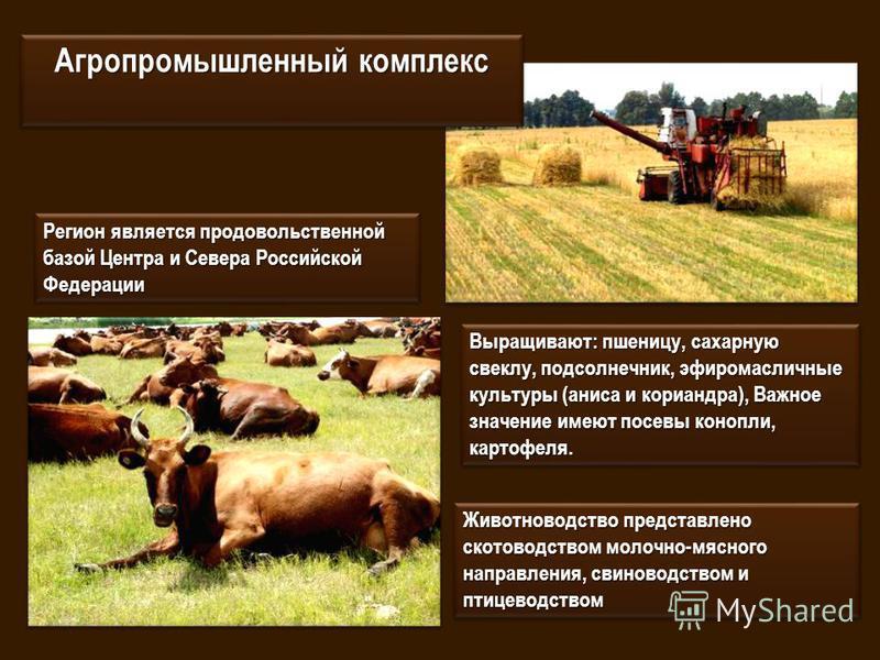 Агропромышленный комплекс Регион является продовольственной базой Центра и Севера Российской Федерации Животноводство представлено скотоводством молочно-мясного направления, свиноводством и птицеводством Выращивают: пшеницу, сахарную свеклу, подсолне