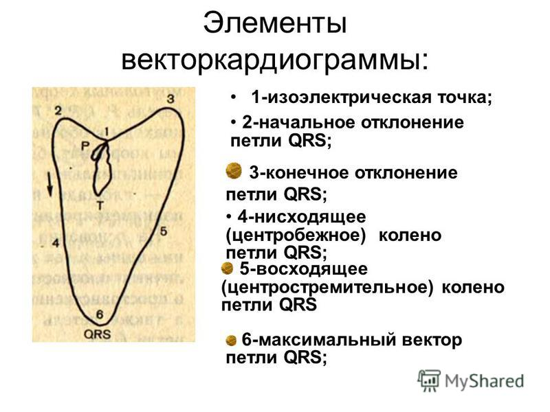 Элементы векторкардиограммы: 1-изоэлектрическая точка; 2-начальное отклонение петли QRS; 3-конечное отклонение петли QRS; 4-нисходящее (центробежное) колено петли QRS; 5-восходящее (центростремительное) колено петли QRS 6-максимальный вектор петли QR
